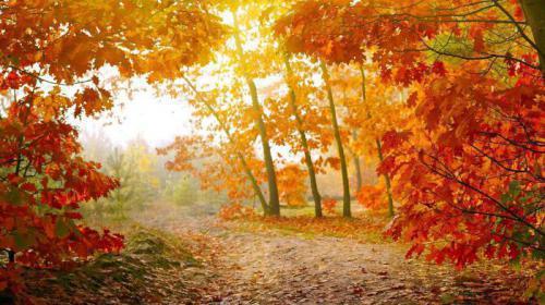 描写秋天的好词、好句