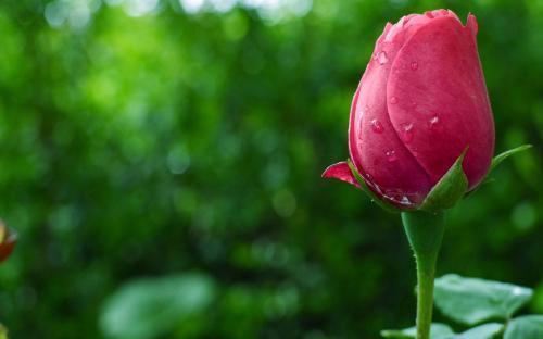 生活养生感悟:惜命最好的方式不是养生,而是管理情绪!