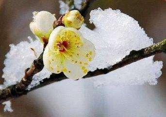 关于冬天的诗句精选40首