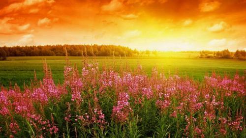 描写春天的好词好句,桃红?#26149;?#23487;雨,柳绿更带春烟