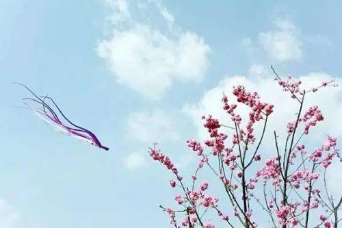 描写春天的优美句子,春天像位爱美的姑娘,让世界姹紫嫣红