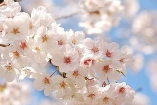 关于春天的唯美句子大全