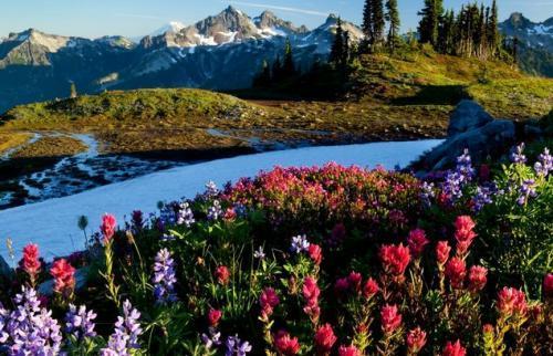 最美春天句子,用简单的语言带你去看春天的世界