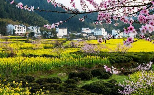 大自然美妙春光的句子,春风正淡荡,白露已清泠