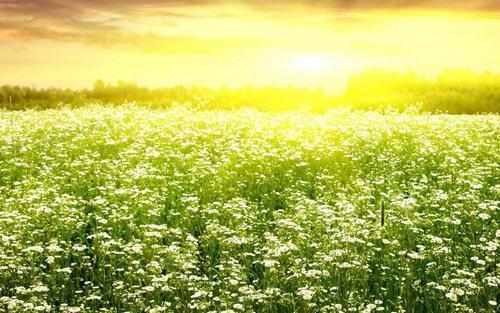 描写春天的语句, 三月醉一场青春的流年,风过无痕,花开向暖