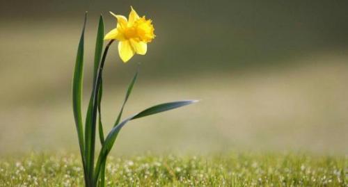 春天的句子,让你的心情阳光明媚