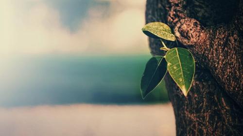 那些没有消灭你的东西,会使你变得更强壮,治愈心灵的唯美说说
