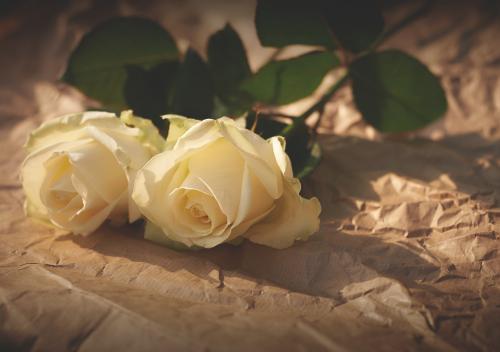 甜美的爱情故事:姻缘树上的诺言