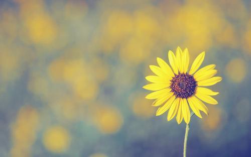 悲伤情绪的管理:顺其自然,远离悲伤之源