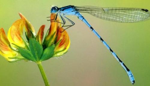 昆虫记好段摘抄
