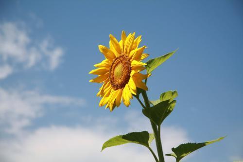 让内心充满阳光的句子