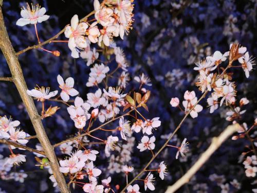 2021春天赏花的心情说说精选40句