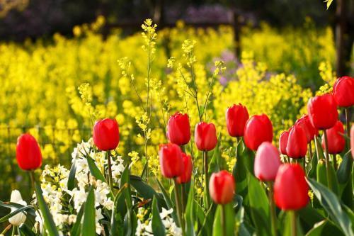 春日赏花拍照的唯美句子合集