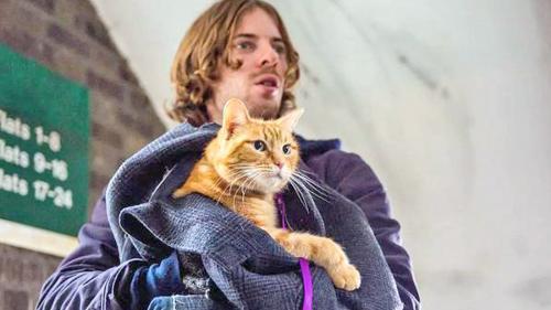 《流浪猫鲍勃2:鲍勃的礼物》观后感精选3篇