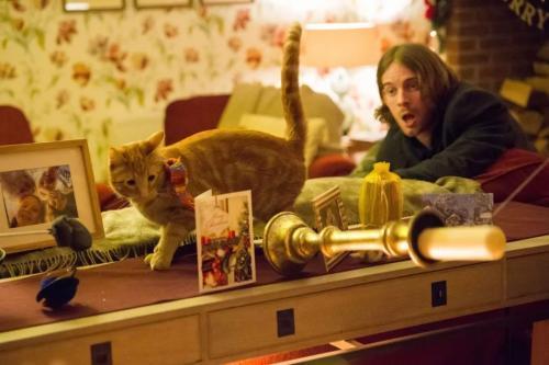 《流浪猫鲍勃2:鲍勃的礼物》影评推荐